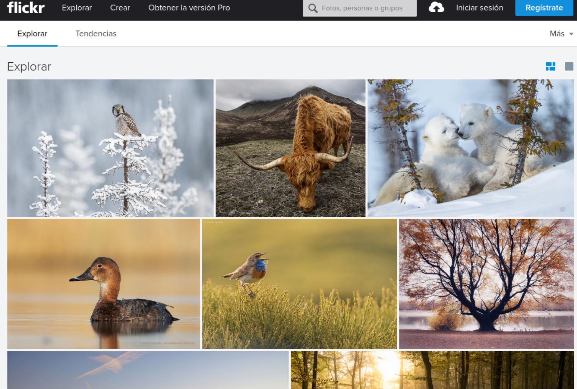 Cambios en Flickr amenazan acervo de millones de fotografías libres